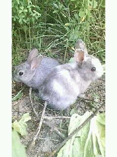 ウサギの赤ちゃん元気かなぁ?
